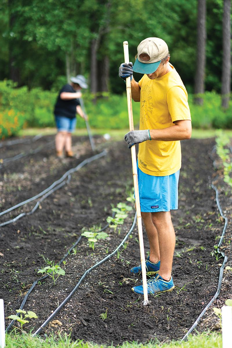 Harvestinghope 5